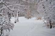 10th Jan 2019 - A walk in the Snow