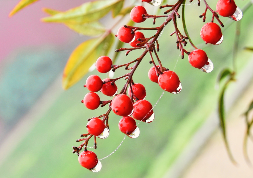 Bird Berries by joysfocus
