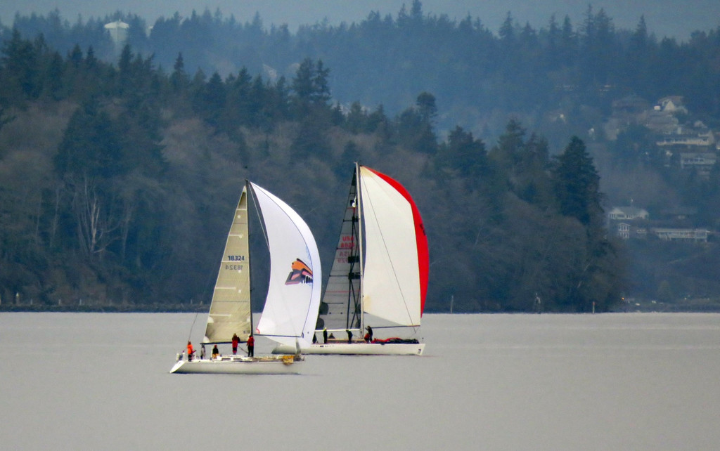 Sailboat Race On Puget Sound, cont. by seattlite