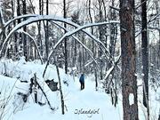 11th Jan 2019 - Snowshoe in the Bush