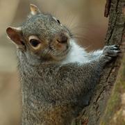 11th Jan 2019 - squirrel closeup