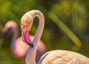 11th Jan 2019 - Flamingo Friday '19 02