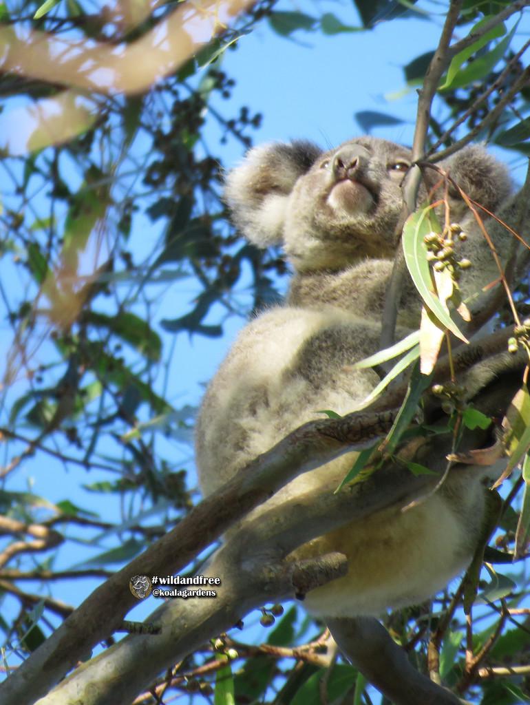 pondering life by koalagardens