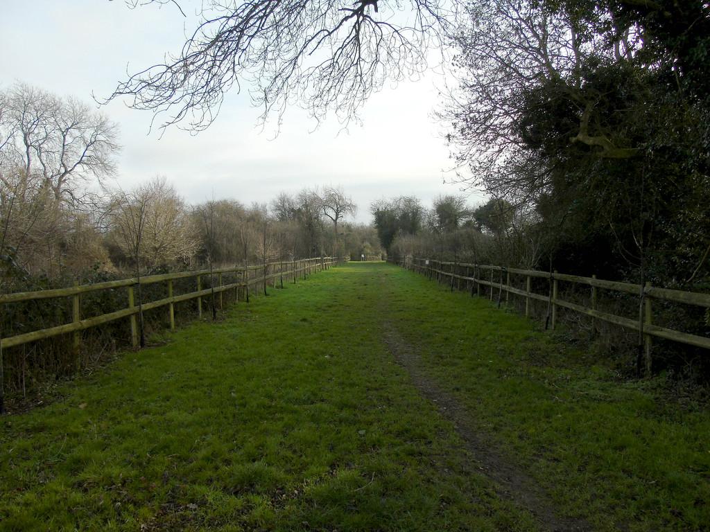 Silver Birch Walk by bulldog