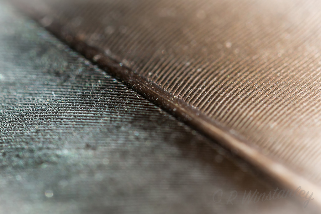 Abstract/Feather by kipper1951