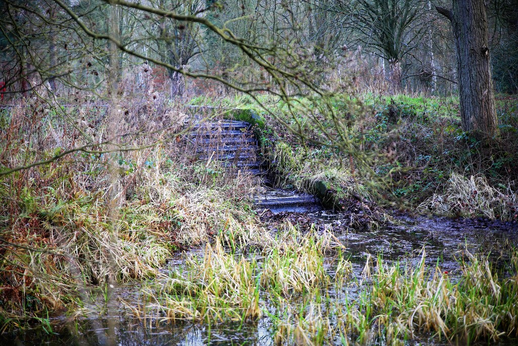 Willingham Woods by phil_sandford