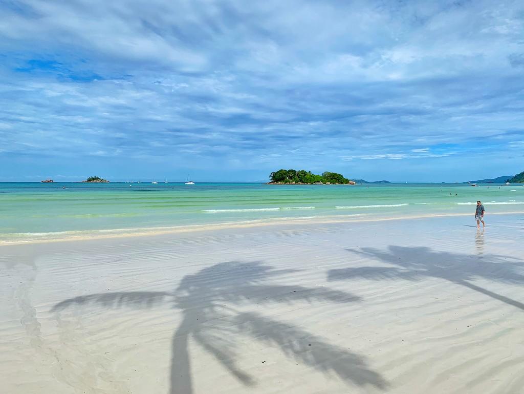 Palm trees shadows.  by cocobella