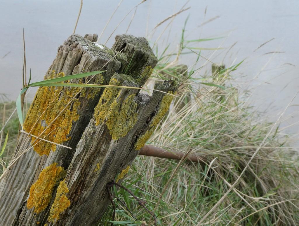 Fence post by flowerfairyann