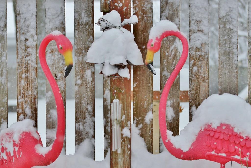 Flamingo Saturday! by lynnz