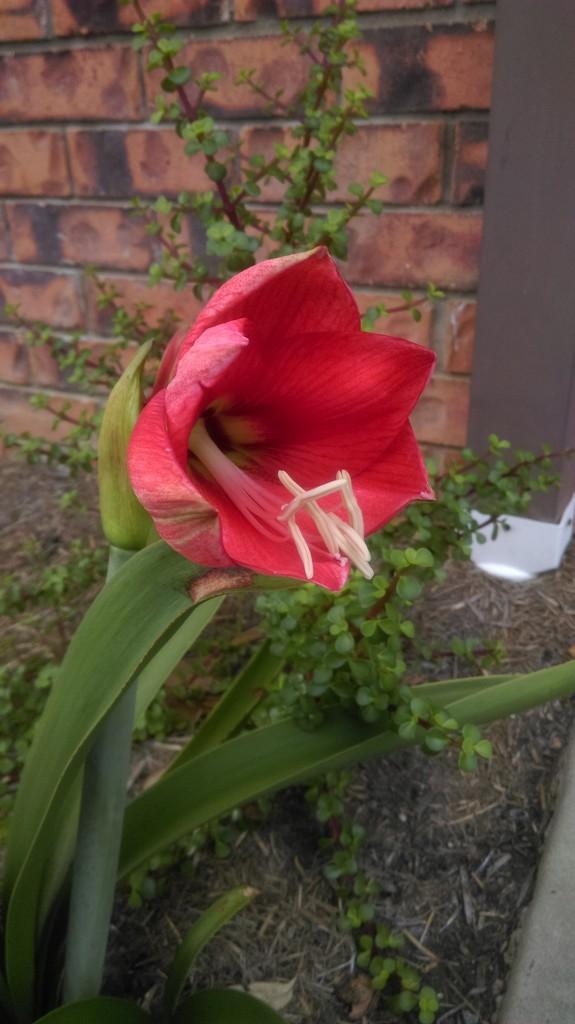 In Full Bloom by mozette