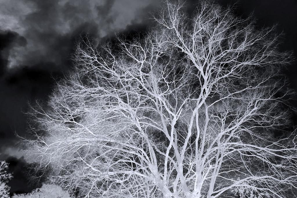 Winter Tree (Inverse) by jaybutterfield