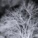Winter Tree (Inverse)