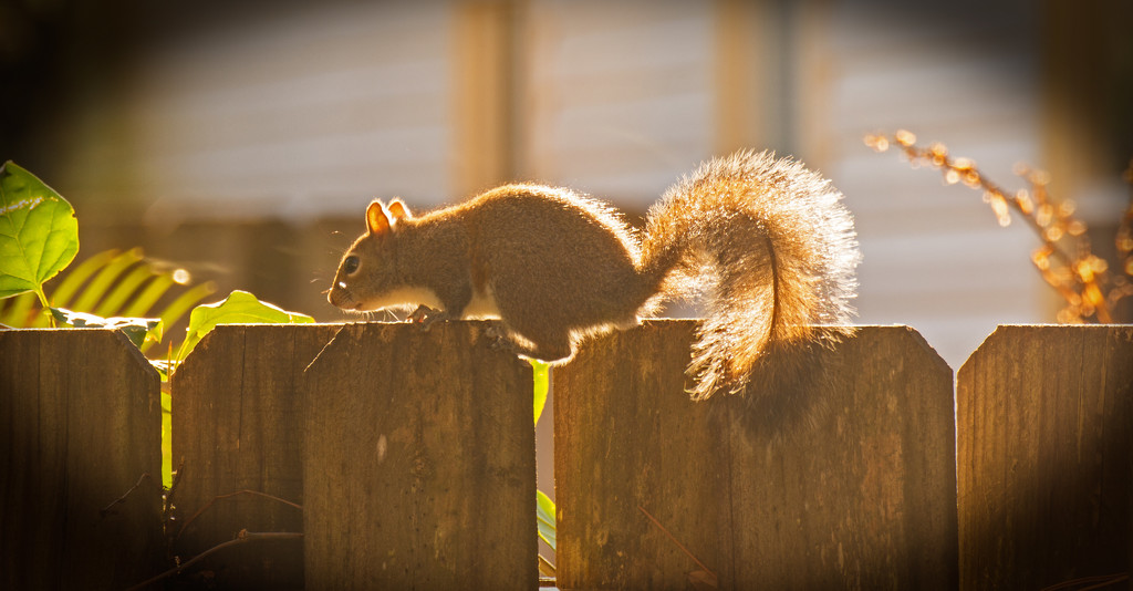Mr Squirrel in the Sunlight! by rickster549