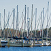 Sailboats, Still at Rest!
