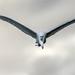 Egret Sky