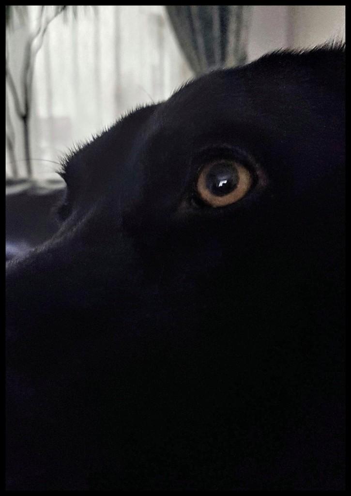 Eye eye!! by lyndamcg