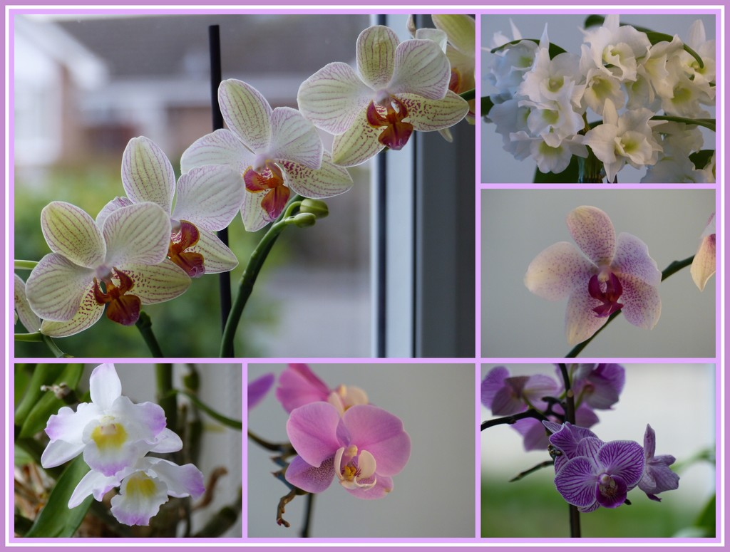 My Orchids by foxes37