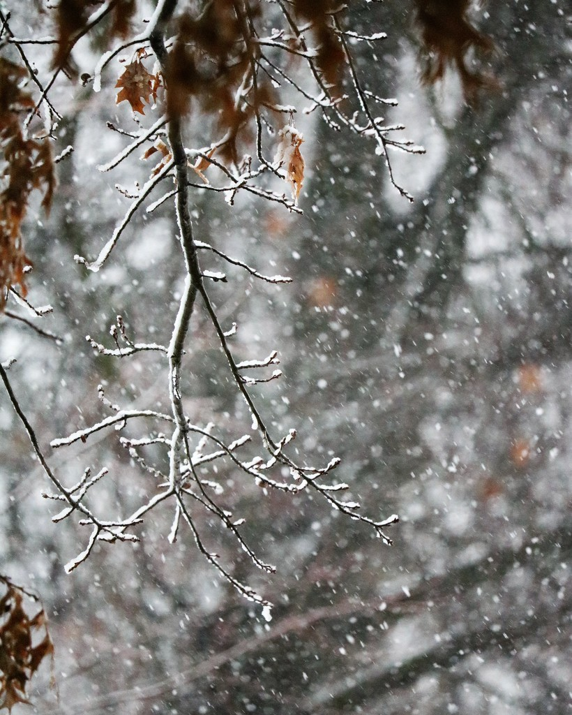 January 12: Snow by daisymiller