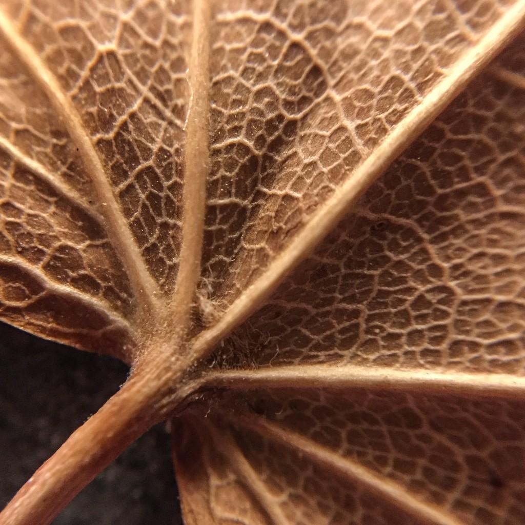 Dry Leaf by imnorman