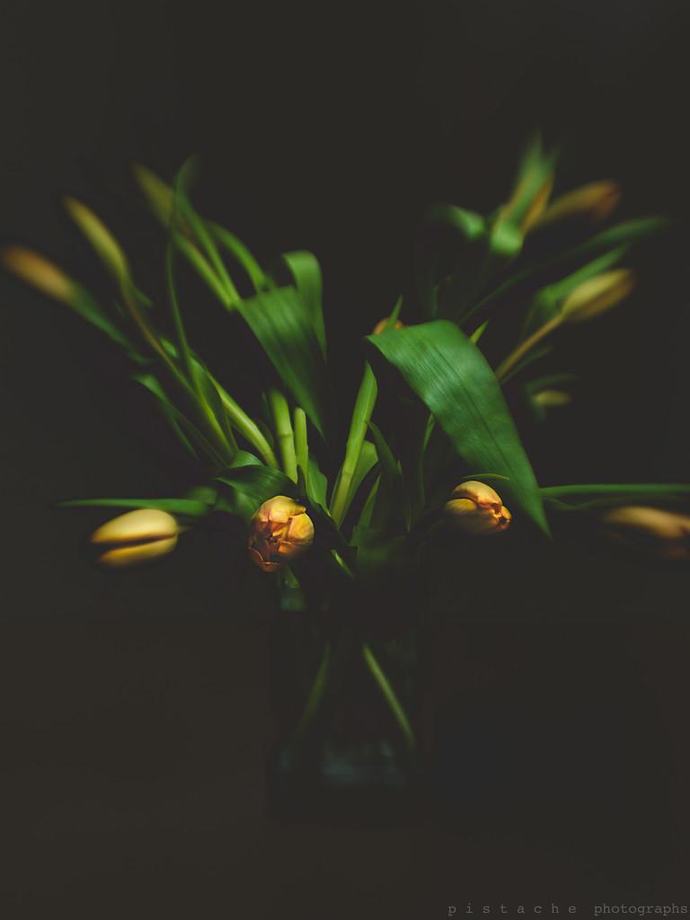 dancing in the dark by pistache