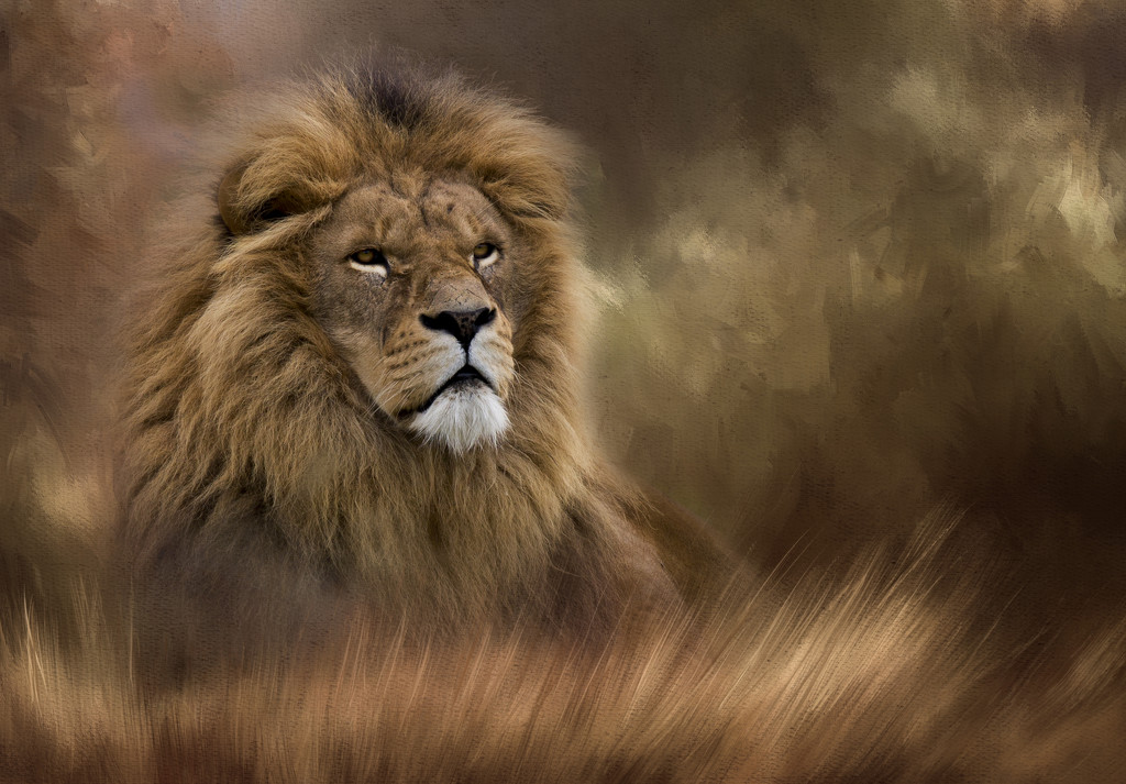 King of the Grassland by shepherdmanswife