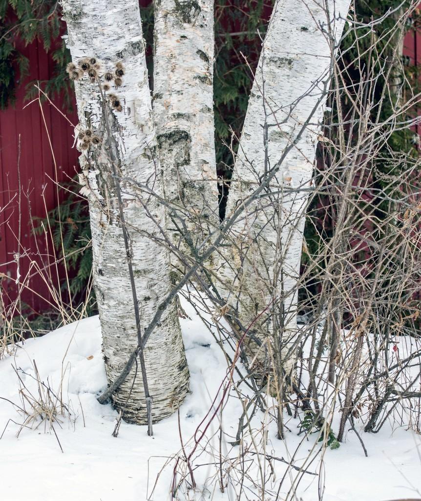 Rule of Odds - Trees by farmreporter