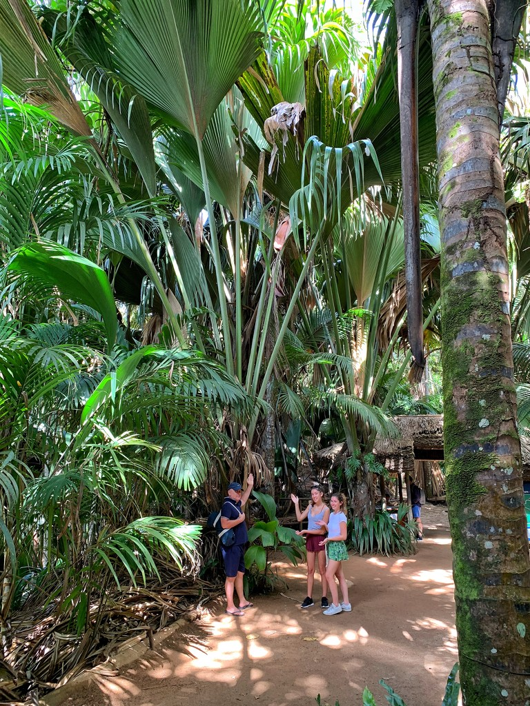 Big palm trees, little people.  by cocobella