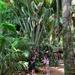 Big palm trees, little people.