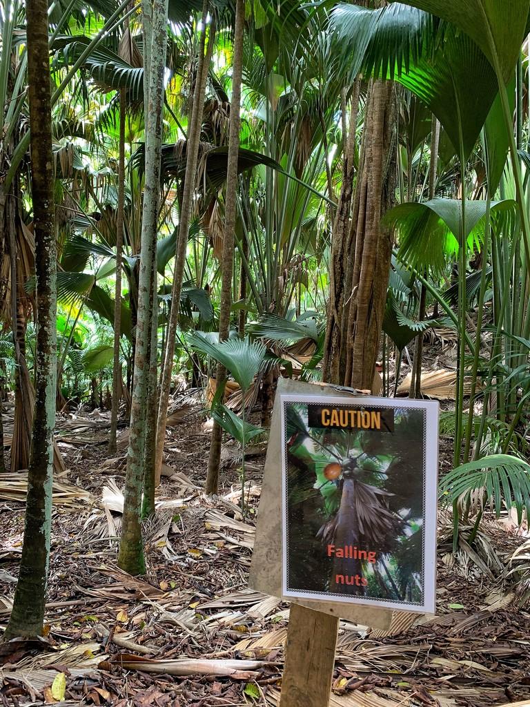 Caution !  by cocobella