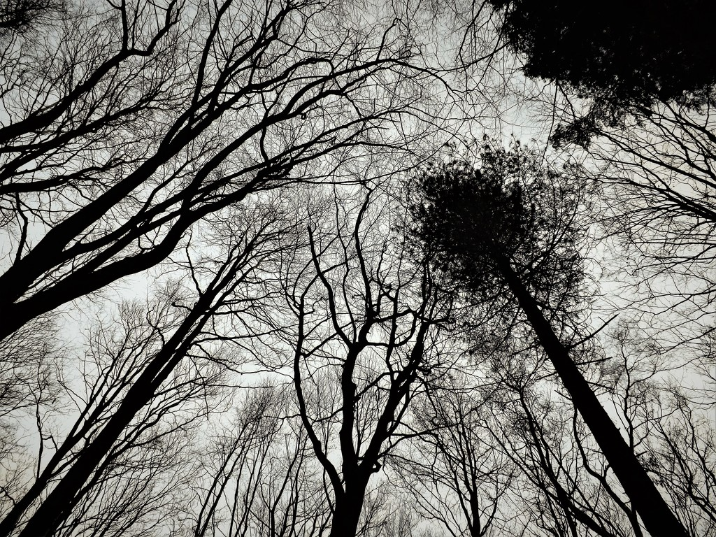 Dark Woods by ajisaac