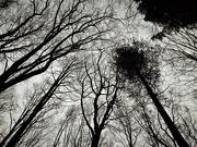 13th Jan 2019 - Dark Woods
