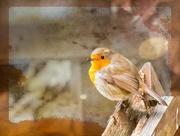 14th Jan 2019 - Robin through the window