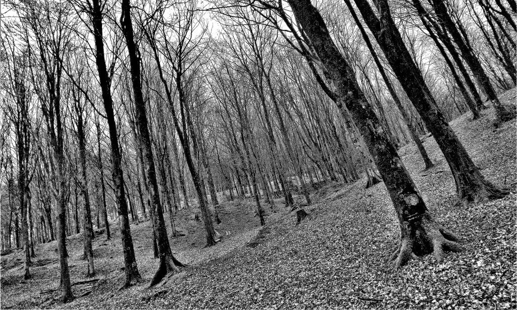 Forest Road Woodland by ajisaac