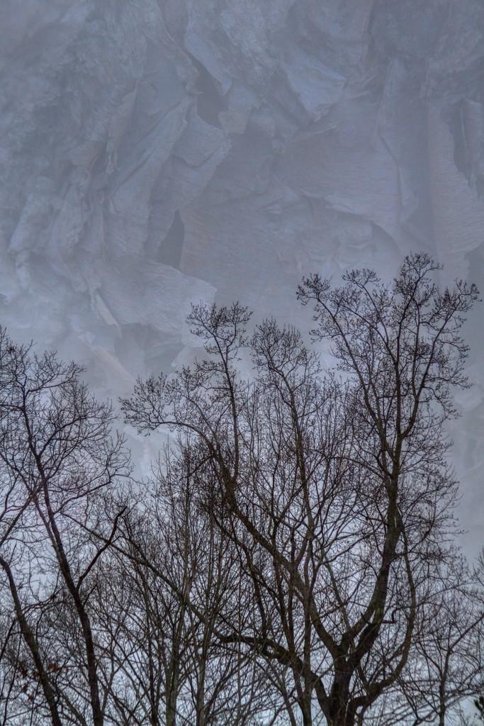 Tree Bark Sky by kvphoto