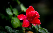 14th Jan 2019 - Rainy Days and Mondays...