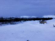 13th Jan 2019 - Across the Tundra