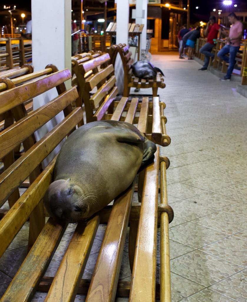 January2019 - 12 Ecuador, Galápagos 11 by jqf