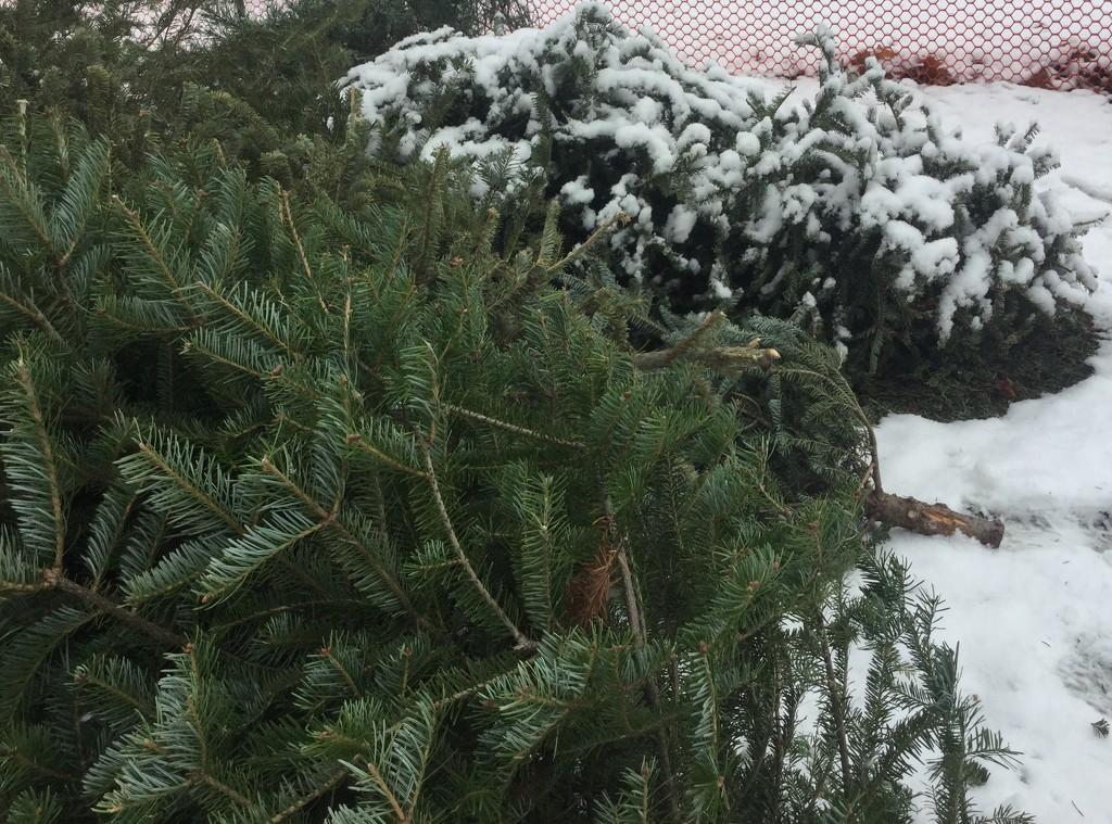 Goodbye little tree by mcsiegle