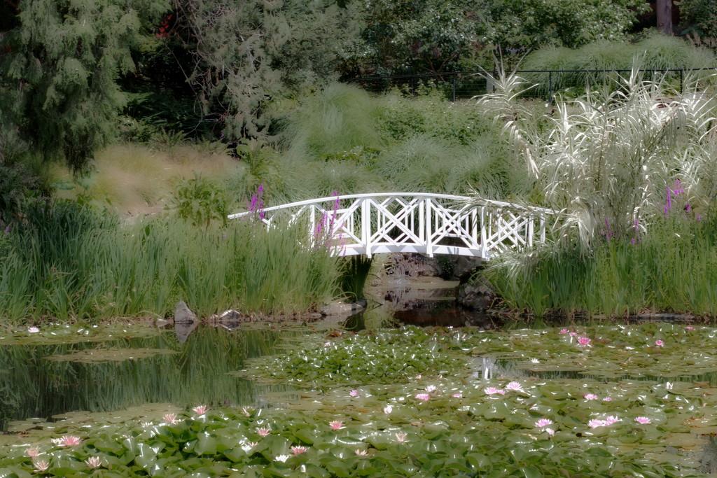 Royal Hobart Botanical Gardens (3) by kgolab