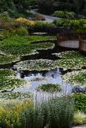 15th Jan 2019 - Royal Hobart Botanical Gardens (1)