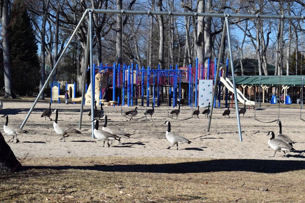 Gooseground by sandlily