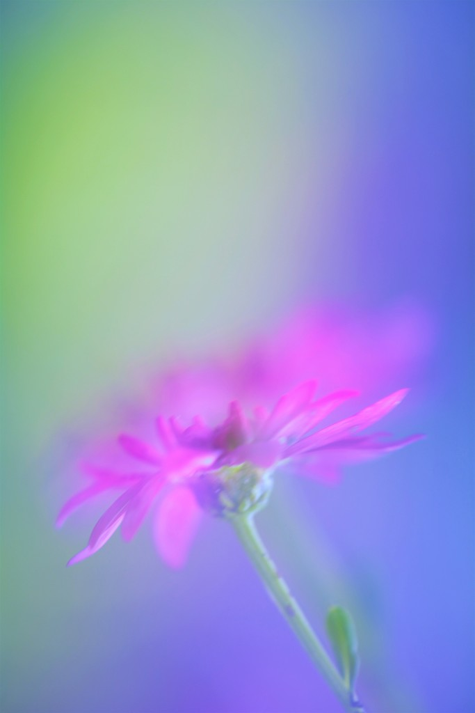 Colour run...... by ziggy77