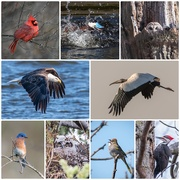 15th Jan 2019 - A few of my bird captures from 2018