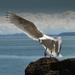 ~Seagull~