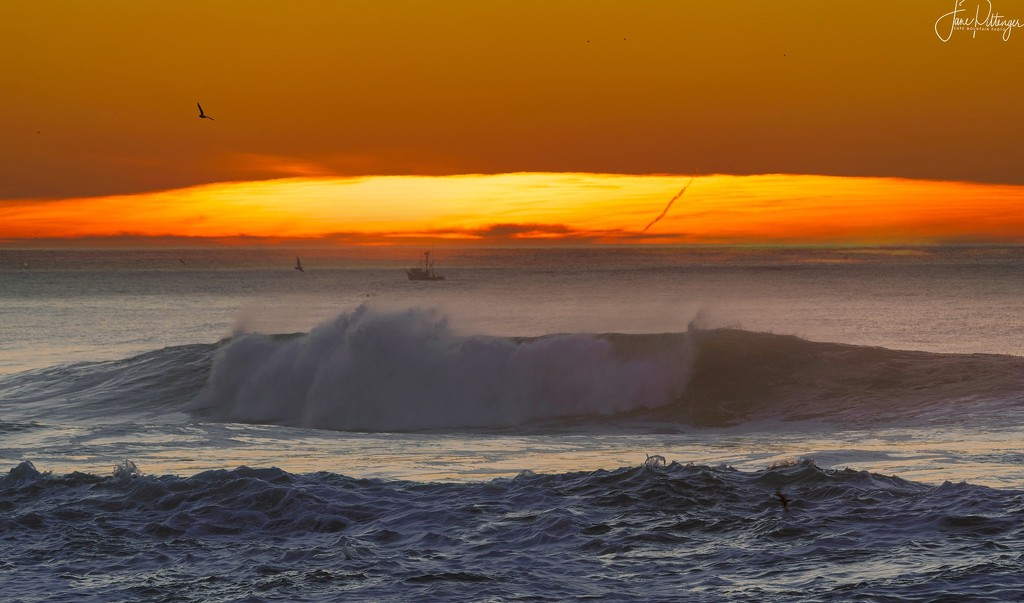 Sunset Seagull and Boat by jgpittenger
