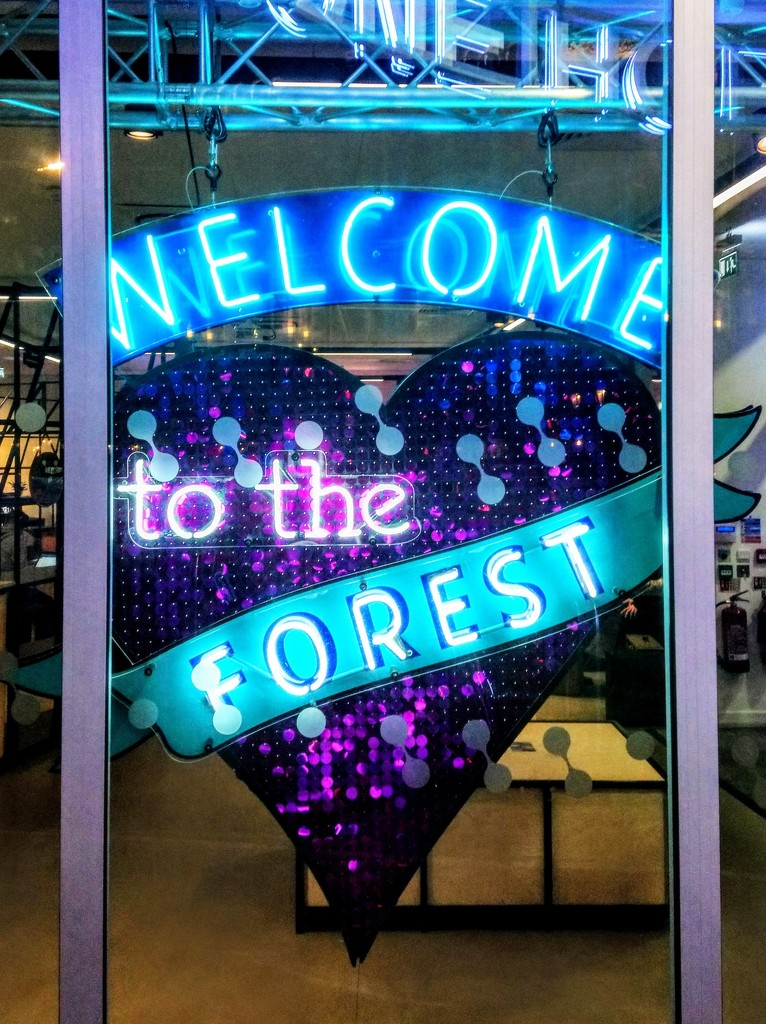 Welcome to the Forest by boxplayer