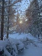 16th Jan 2019 - Snowshoeing