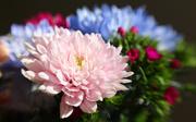 16th Jan 2019 - Birthday Bouquet