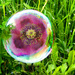Poppy in a Bubble by onewing