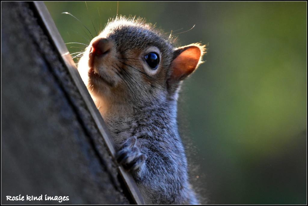 Peeping at me by rosiekind